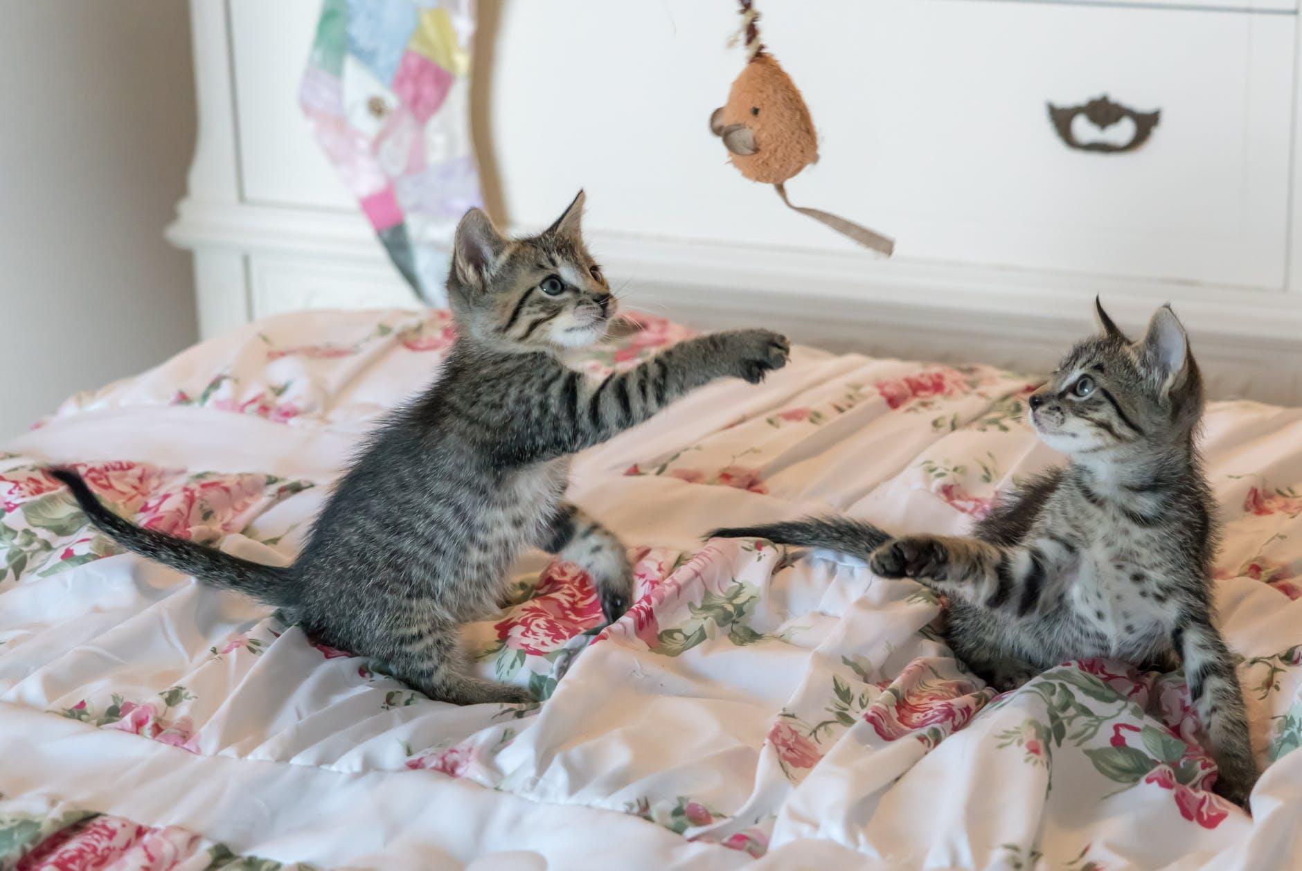 Jak zrobić zabawki dla kota